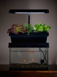 desktop aquaponics system turns your fish tank into a garden