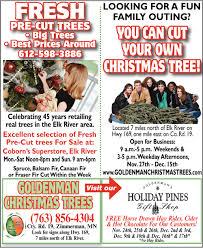 fresh pre cut trees goldenman u0027s christmas trees