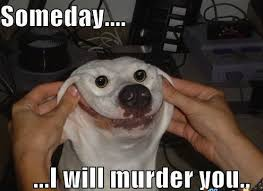 Funny Meme Dog - 44 of the happiest dog memes that will keep you laughing for hours