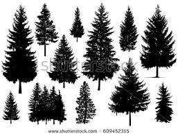 set silhouette pine trees stock vector 609452315