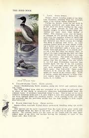 national loon yearbook bird book illustrated free ebook