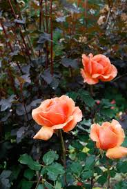garden color schemes u2014 favorite planting color combinations