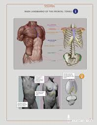 Human Anatomy Reference 402 Best Anatomy For Sculptors Images On Pinterest Anatomy