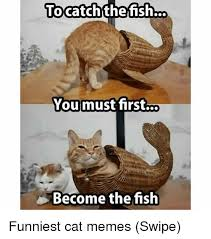 Funniest Cat Memes - tocatchthefish you must first become the fish funniest cat memes