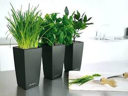cute pots for plants house plant containers house plant containers large indoor plant