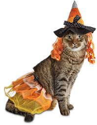 witch costume for cats about petco images