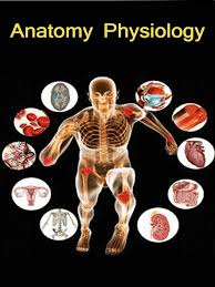 Anatomy And Physiology Apps App Shopper Anatomy Physiology Hindi Healthcare U0026 Fitness