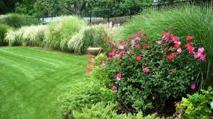 make your garden beautiful with ornamental herb rue best for