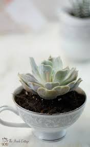 Succulent Planter by Succulent Planter From Repurposed China An Easy Diy Gift Idea