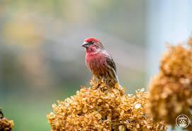 backyard birding is back