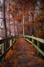 Tennessee travel plans images The fall foliage at these 10 state parks in tennessee is jpg