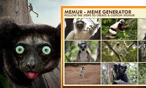 Lemur Meme - shane mielke work