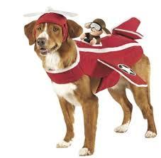 Halloween Airplane Costume Airplane Dog Costume Google Maverick U0027s Board