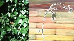 o henry u0027s the last leaf as a short story