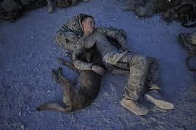 belgian shepherd special forces belgian malinois u2013 the dogs of beer