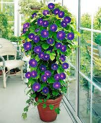 Best Plants For Vertical Garden - amazing vertical garden ideas about climbing plants in pots the