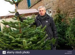 christmas tree farm for sale christmas lights decoration