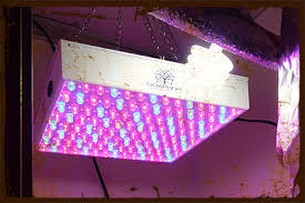 Plant Lights How To Choose by Artificial Grow Lights Selecting Your Light Cfl T8 T5 Hps Mh