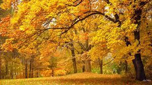 forces nature park oak forest seasons orange fall wind maple