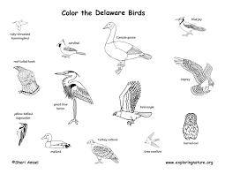 Delaware birds images Delaware habitats mammals birds amphibians reptiles jpg