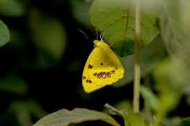 free stock photo of butterflies butterfly butterfly on a flower