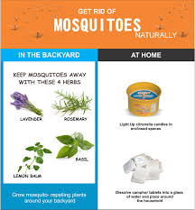 1530557060 how to get rid of mosquitoes jpg