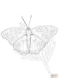 owl butterfly coloring page free printable coloring pages