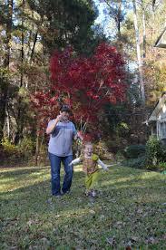 what to do over thanksgiving break family diltz november 2012