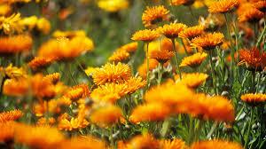 best orange color best winter flowers for color sunset