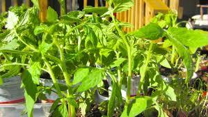 organic vegetable gardening getting started youtube