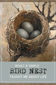 93 best nests and eggs images on pinterest bird nests eggs and