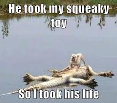 Alligator Memes - he took my squeaky toy so i took his life meme weknowmemes