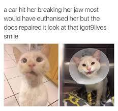 Cute Love Meme - this meme s war