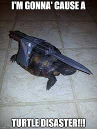 Turtle Meme - turtle disaster imgflip