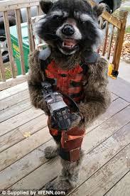 Raccoon Halloween Costumes Christina Borchardt Wins Halloween Rocket Raccoon Costume