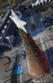 Christmas Tree Ideas 2014 Uk Britain U0027s Largest Christmas Tree Goes Up In Cheshire Daily Mail