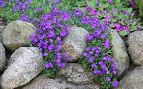 how to build and plant an alpine rock garden david domoney