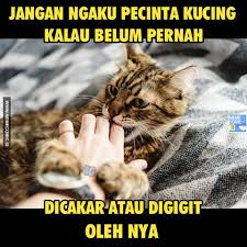 Meme Kucing - mayoritas pecinta kucing sering nih kena meme comic indonesia