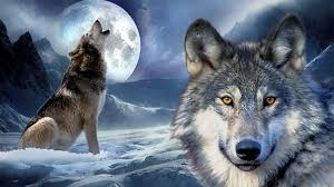 wolf howling at the moon wallpapers gallery 41 plus pic wpw5011344