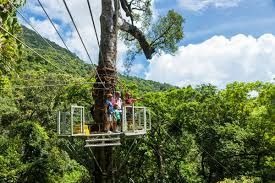 cairns attractions go jungle surfing daintree style