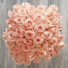 roses online order 50 pink roses online in miami same day delivery roses