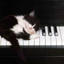 funny pictures of cats sleeping pianos pictures best of the funny meme