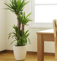 designs ideas simple indoor plant idea in white pot near solid