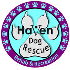 foster application haven dog rescue
