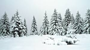 winter owy snow tree nature trees winter wallpaper iphone 6 plus
