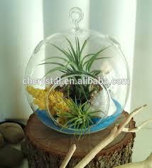 hand blown glass air plant globe hand blowing baubles terrarium mh