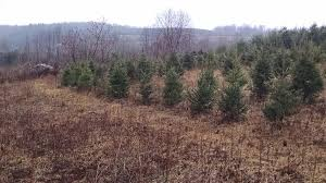 commercial tree planting wholesale trees