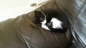 3 ways litter train kitten wikihow