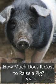 Backyard Pig How Much Does It Cost To Raise A Pig Lovelivegrow