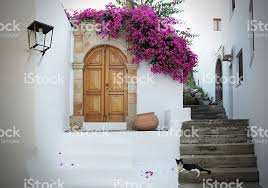 in greece white walls fuchsia flowers stairs and cat relaxing